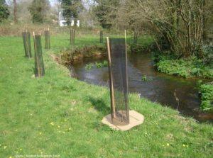 plantation de ripisylve_Comcom Val de l'Indre-Brenne